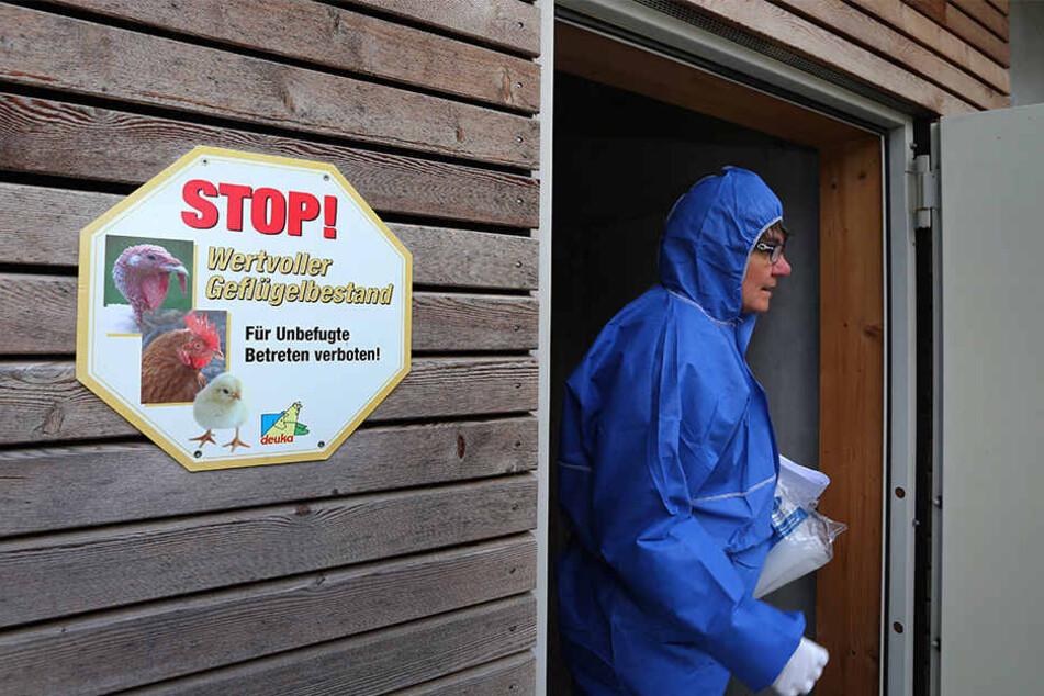 Eine Tierärztin überprüft einen Betrieb mit Geflügel.