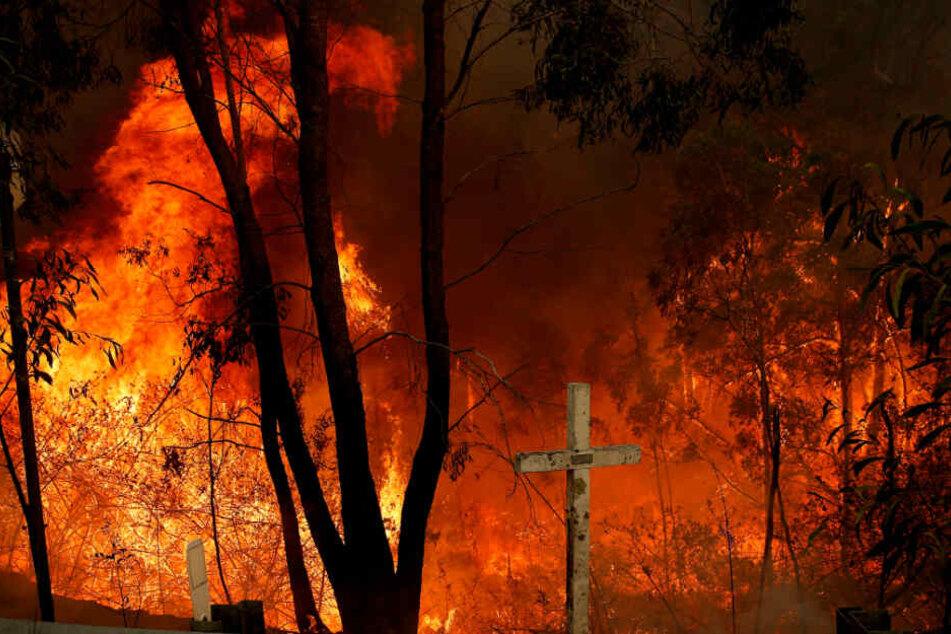Bereits seit Oktober halten viele Buschbrände in Teilen Australiens die Menschen in Atem.