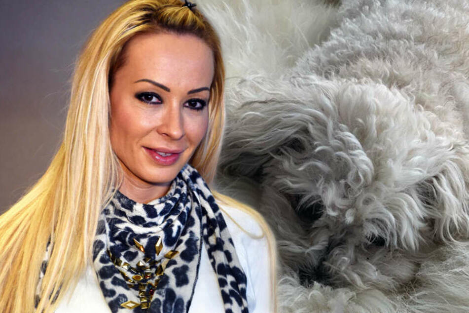 Cora Schumacher in Sorge: Wurde ihre Hündin vergiftet?