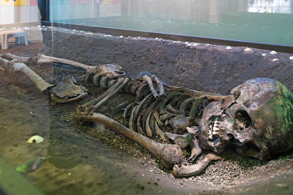 Skelett im Brunnen: Zeuge in Mordprozess verschwunden!