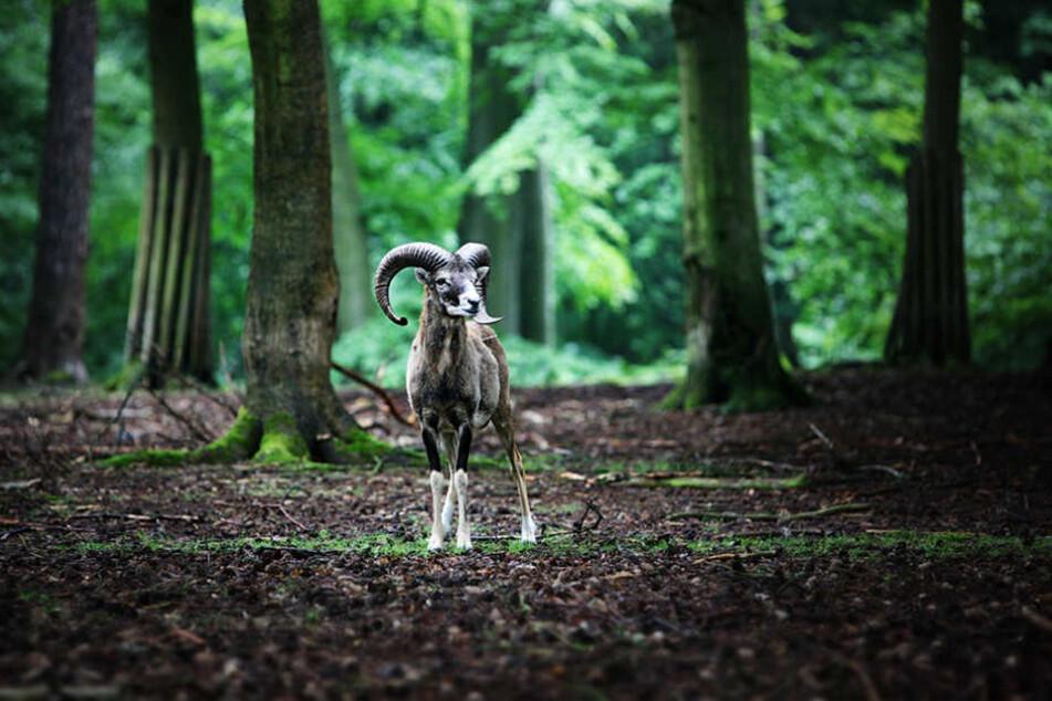 Die Tiere sollen Kindern helfen, einen respektvollen Umgang mit der Natur zu  lernen