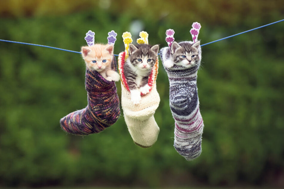 Einfach abgehangen! So können die drei süßen Kitten wenigstens nicht  weglaufen.