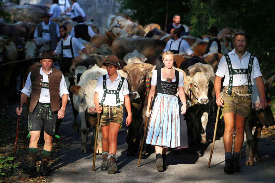 Viehscheid im Allgäu: Hirten treiben im Vilstal ihre Herden ins Tal.