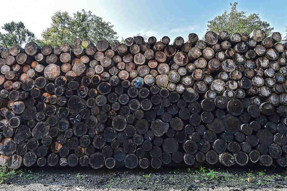 Die Preise für Fichtenholz sinken seit 2018 kontinuierlich.