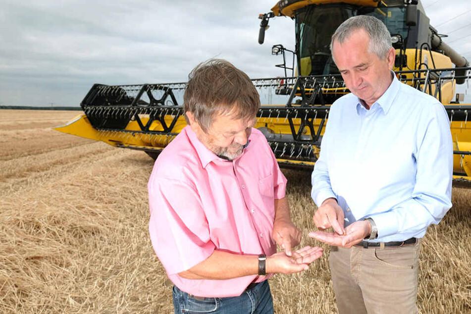 Begutachten die Dürreschäden in Nordsachsen: Agrarminister Thomas Schmidt (57, CDU, r.) und Landesbauernpräsident Wolfgang Vogel (66).