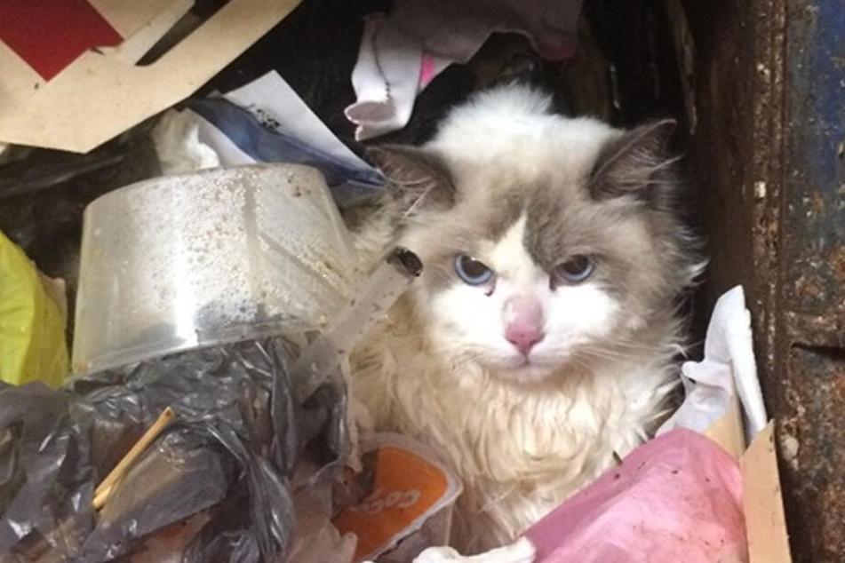 Die Katze wurde wie Müll entsorgt.