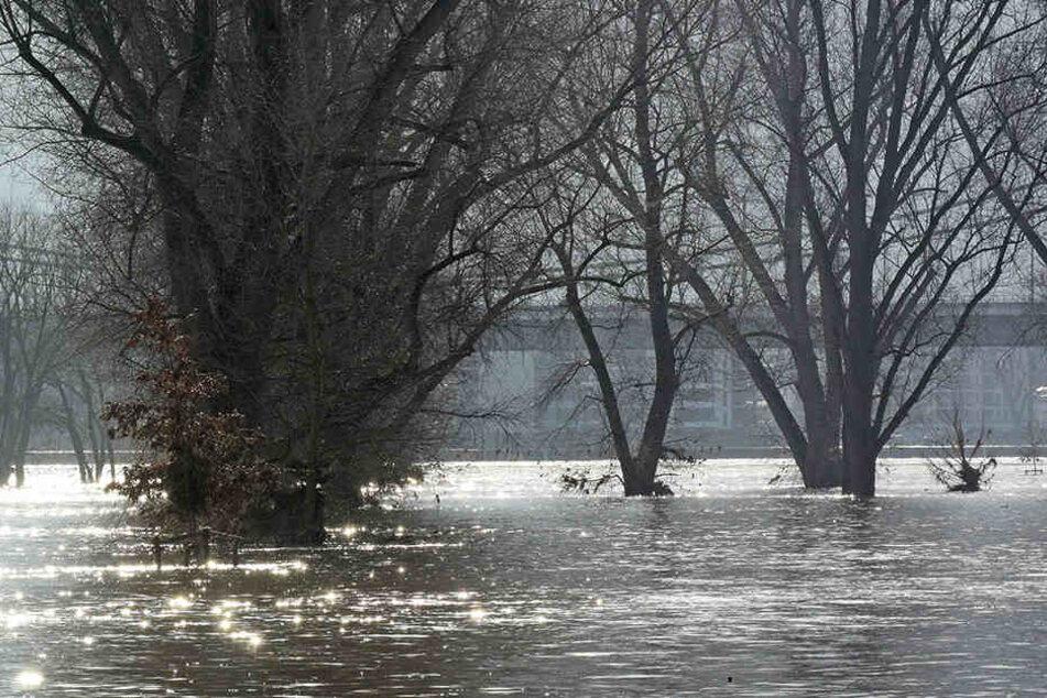 Der Rheinpegel in Köln steigt wieder an.