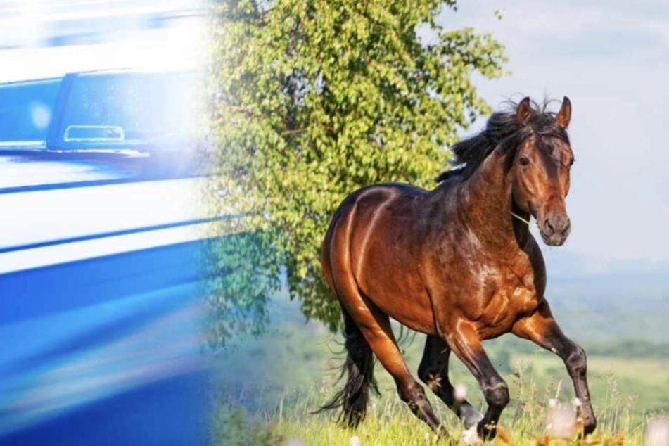 Zwei Pferde hatten sich aus ihrer Koppel befreit. (Symbolbild)