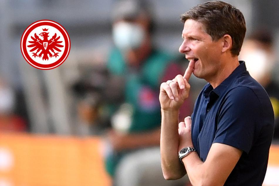 Kurioser Grund: Eintracht Frankfurt startet ohne Trainer Glasner in die Euro-League