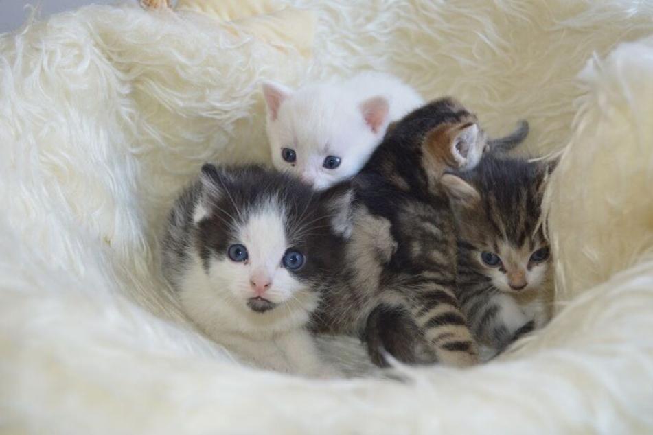 Das Tierheim Chemnitz-Röhrsdorf sucht Namenspaten für Kätzchen.