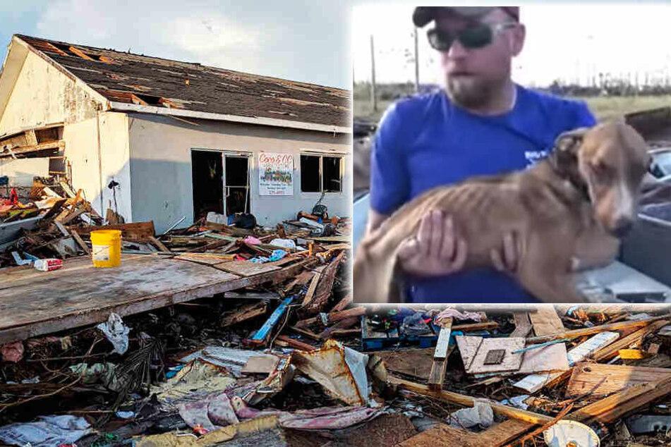 Hund nach einem Monat gerettet! Niemand glaubte noch an ihn
