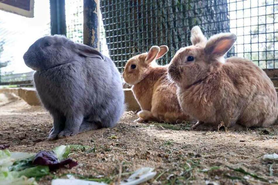 Zum Kuscheln niedlich! Leider sind kleine Tiere wie diese Kaninchen nicht  sonderlich robust gebaut.