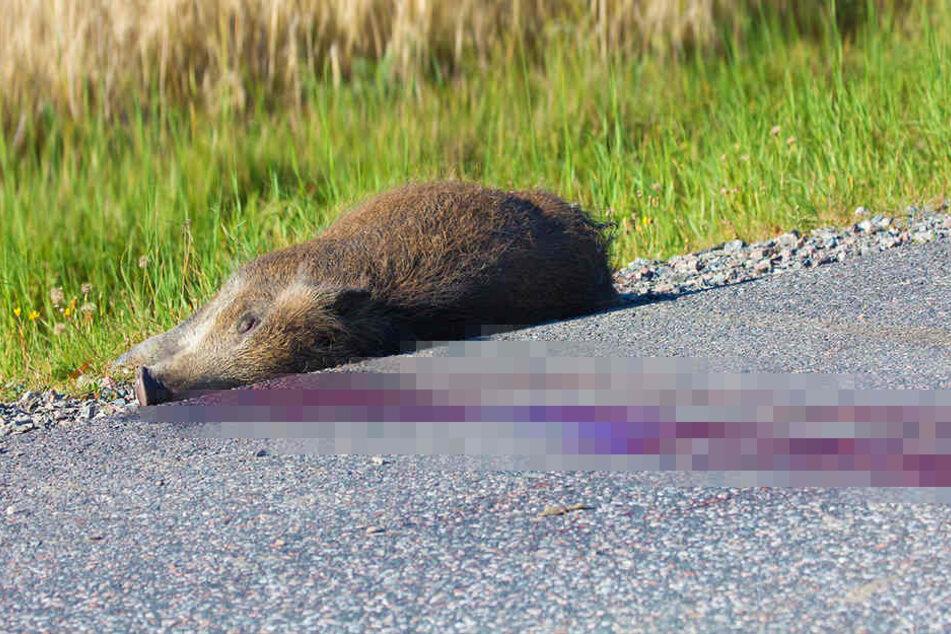 Ein Wildschwein löste jetzt gleich drei schwere Unfälle aus. (Symbolbild)