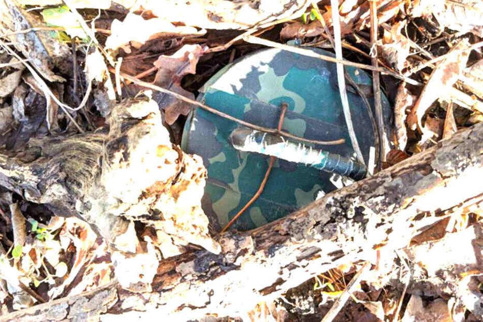 Dieser Fund inmitten eines alten Holzstapels kam einem Spaziergänger merkwürdig vor.