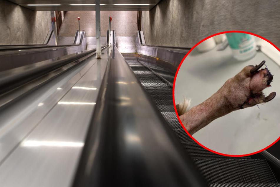 Darum sollte Dein Hund auf keinen Fall Rolltreppe fahren