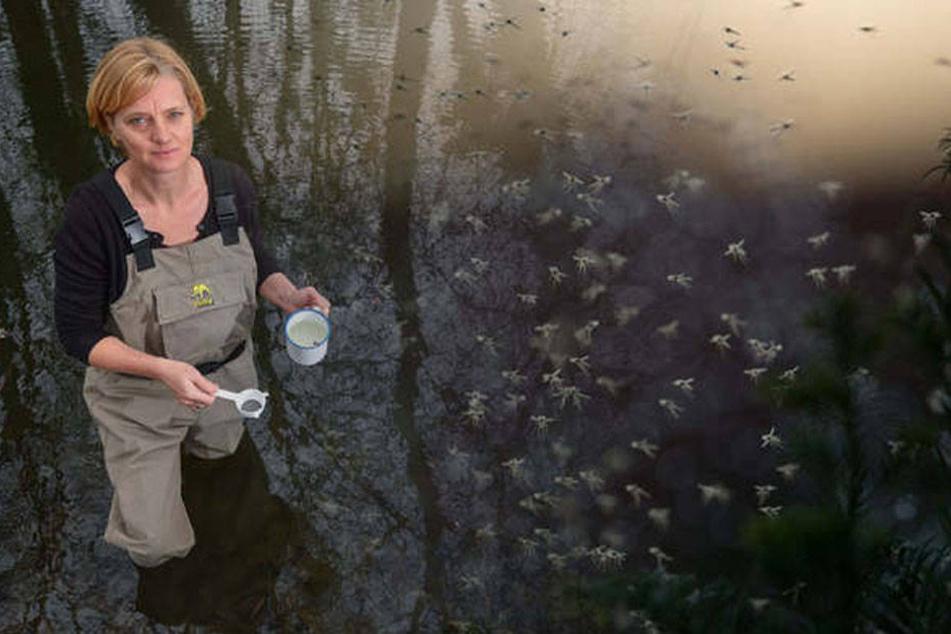Doreen Walther muss es wissen: Oberhavel ist der Mücken-Hotspot Deutschlands. (Bildmontage)