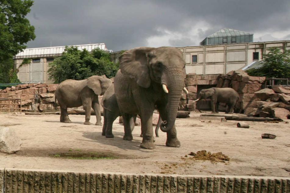 Das Gehege der Elefanten im Tierpark ist in die Jahre gekommen.