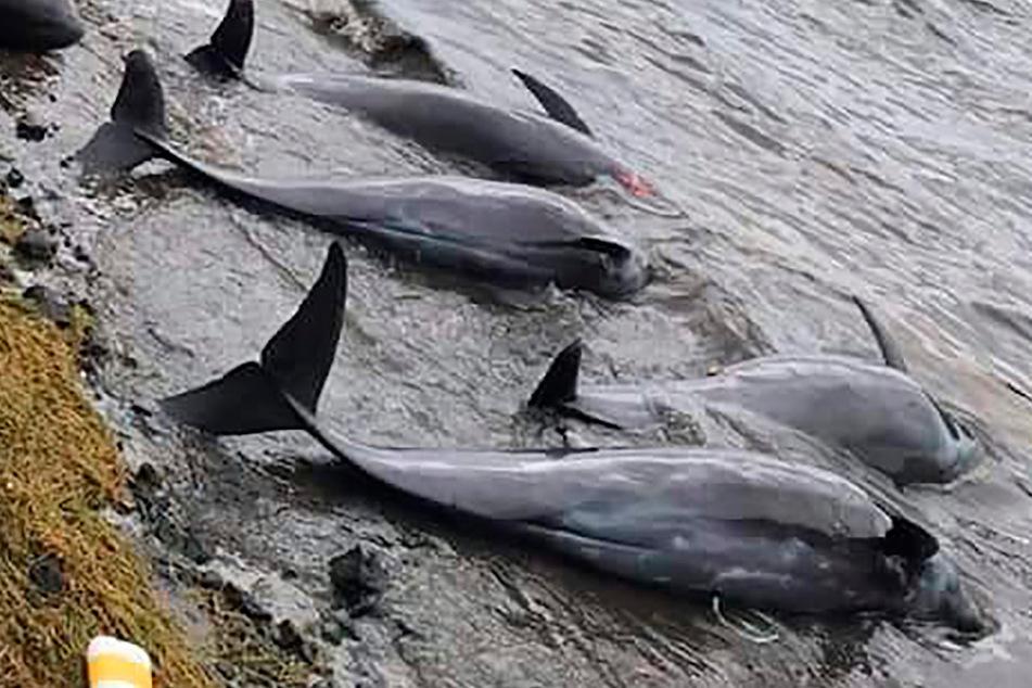 Immer mehr tote Delfine vor Urlaubsparadies angeschwemmt