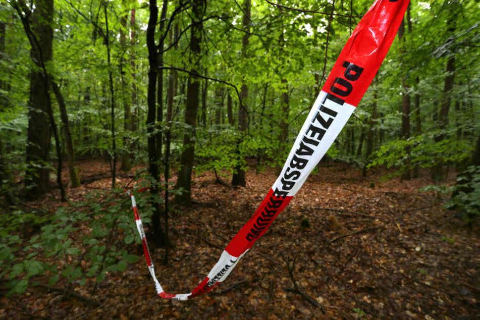 In der Nähe eines Waldstücks wurden die Knochen gefunden. (Symbolbild)