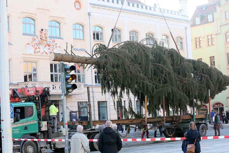 """2015 war ein Desaster: Der Baum wurde als """"Krüppelfichte"""" verspottet."""