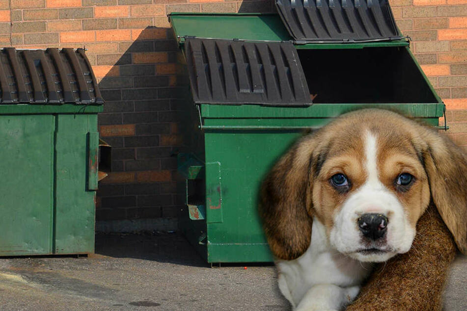 Grausige Aufnahme: Frau packt Welpen und schleudert ihn in Müllcontainer!
