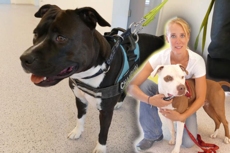 Tierschutz verzweifelt am Schicksal der Listenhunde: Wer ist verantwortlich?