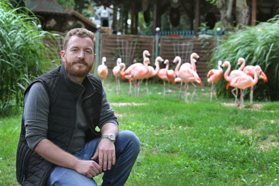 Parkbetreiber Matthias Mölter sitzt im Freizeit-Land Geiselwind vor seinem Flamingo-Gehege.