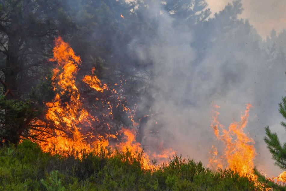 Hitze kommt zurück nach Brandenburg: Waldbrandgefahr steigt