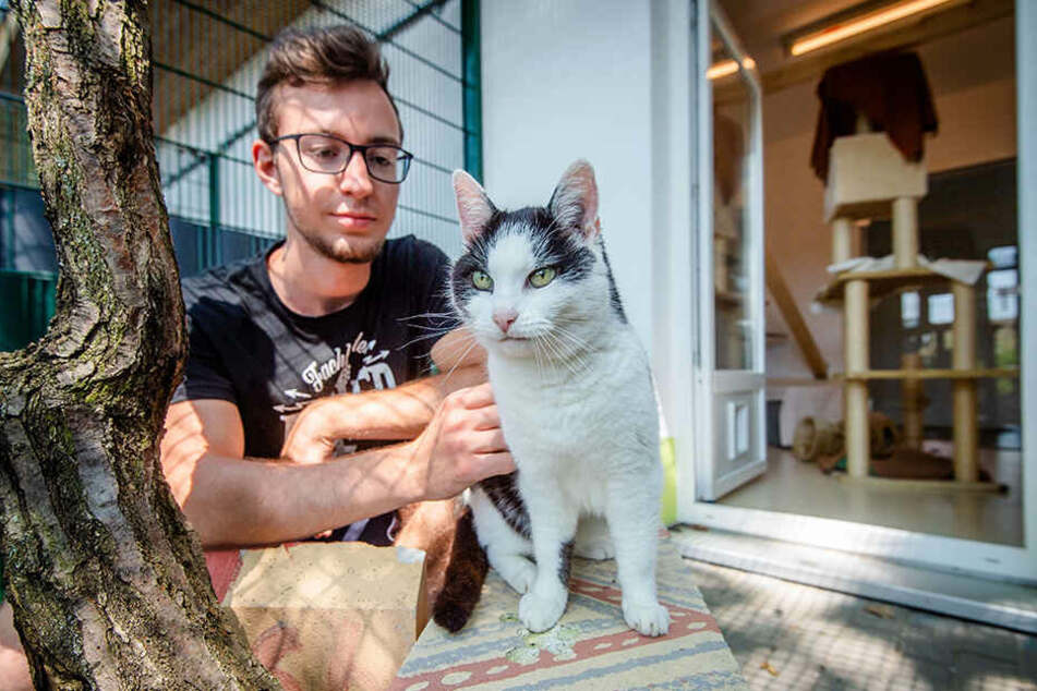 Auch die neue Katzenpension soll Geld in die Tierheimkasse spülen.