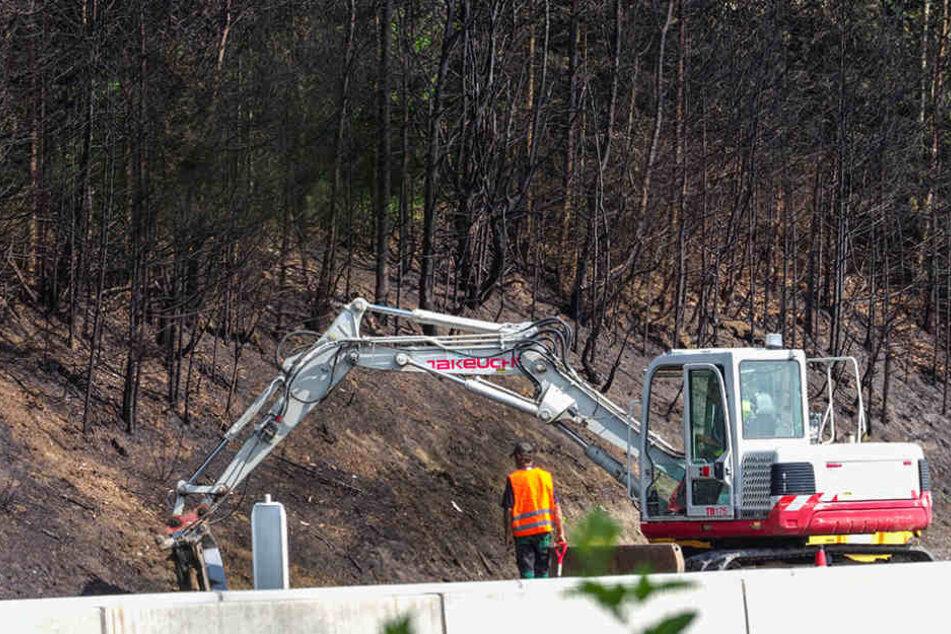 Ein Bagger bearbeitet das Waldstück, das durch die extreme Hitze des Feuers  selbst brannte.