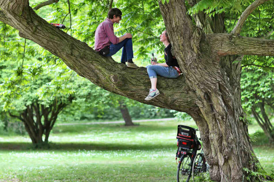 Von Hitze und Trockenheit bedroht! In Leipzig sterben jetzt schon Bäume ab