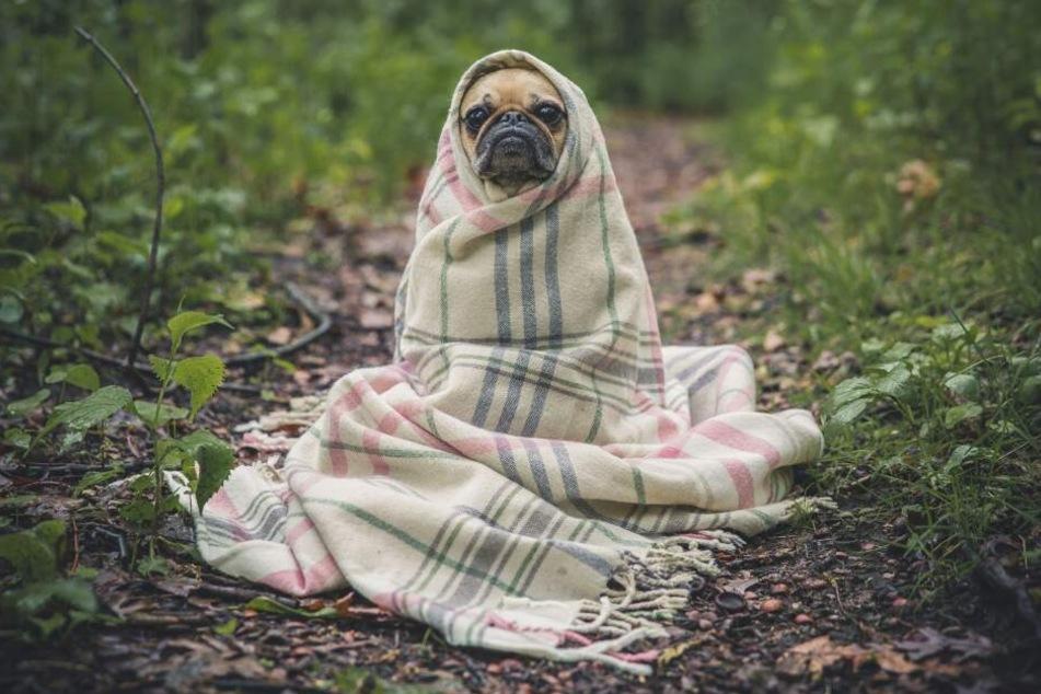 Hunde sind Rudeltiere und wollen nicht allein gelassen werden.