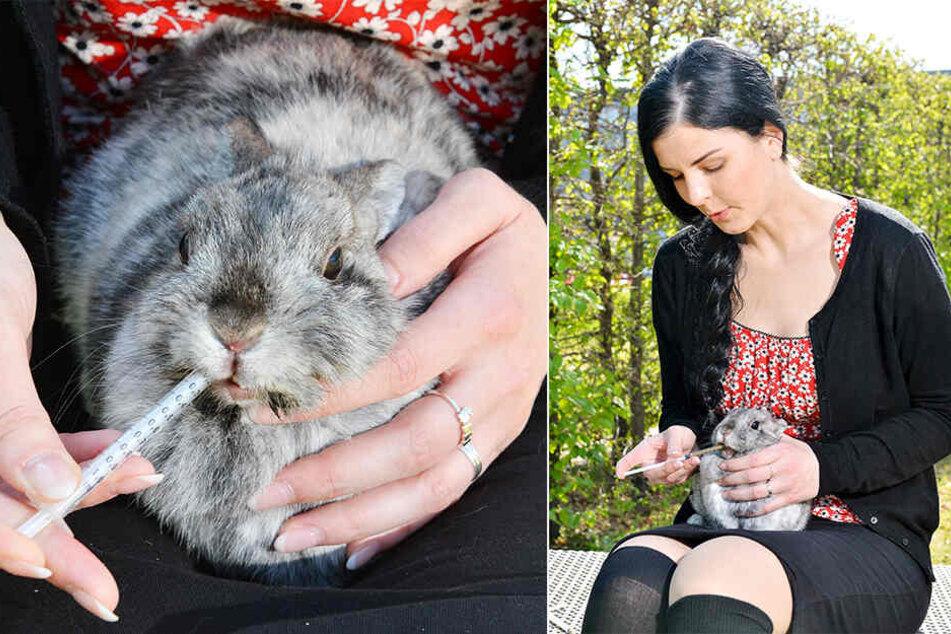 Uta Lüdtke (33) hat ein Herz für Kaninchen. Ihr aktuelles Sorgenkind Motti pflegt und hegt sie seit einer Woche. Alle zwei Stunden gab sie ihr mit Spritzen Päppelbrei ins Mäulchen.
