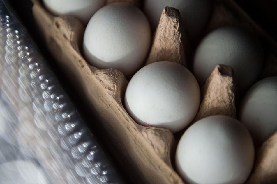 Die giftigen Eier sind mit dem Schädlingsbekämpfungsmittel Fipronil belastet.