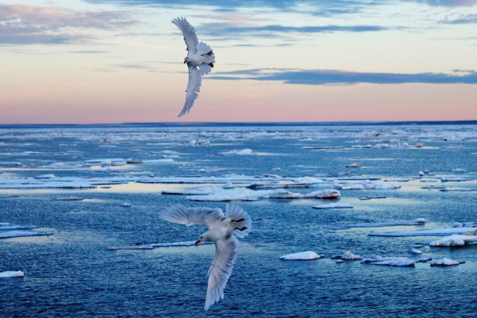 Es ist denkbar, dass Luftmassen im April aus der Zentralarktis heraustreiben und nach Europa kommen. (Symbolbild)