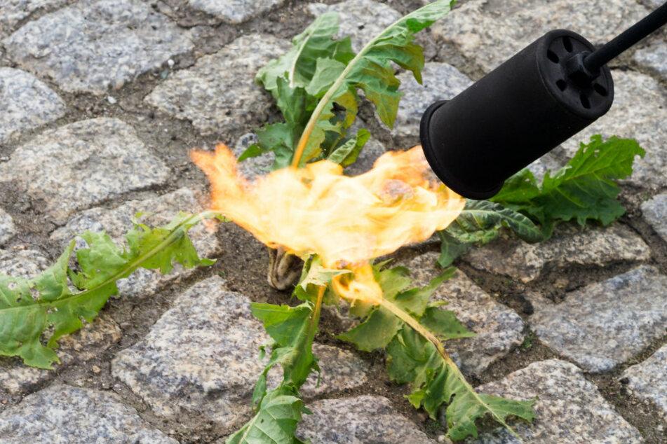 Ein Rentner wollte in Werdau Unkraut abbrennen und setzte dabei eine Hecke in Brand. (Symbolbild)
