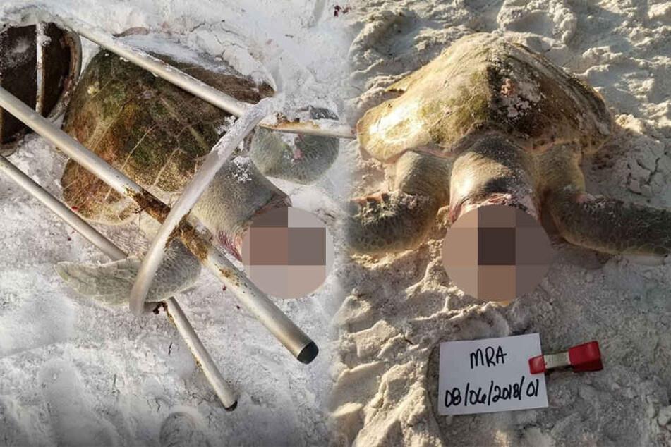 Das vom Aussterben bedrohte Reptil lebt nicht mehr.
