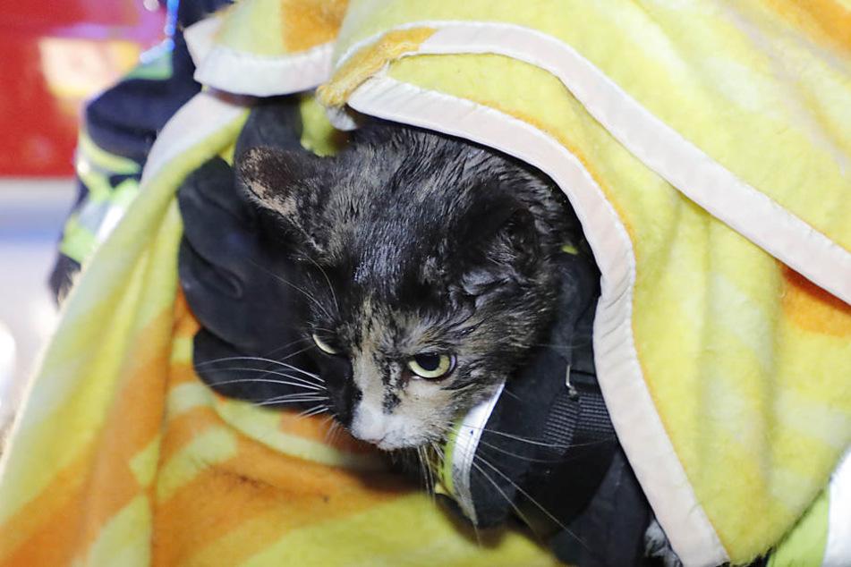 Eine Katze konnte vor dem Flammentod bewahrt werden.