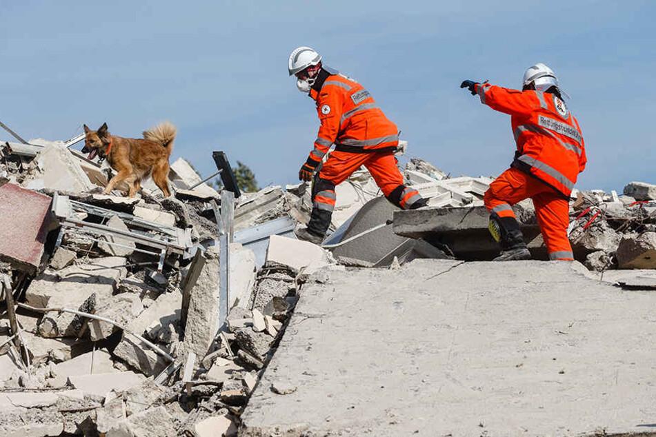 Hundeführer und ihre Spürhunde trainieren in Mecklenburg-Vorpommern das Aufspüren verschütteter Personen im Rahmen einer EU-Katastrophenschutzübung.