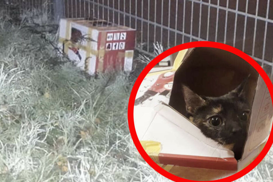 Herzlos: Die junge Katze wurde einfach über den Zaun des Tierheims geworfen.