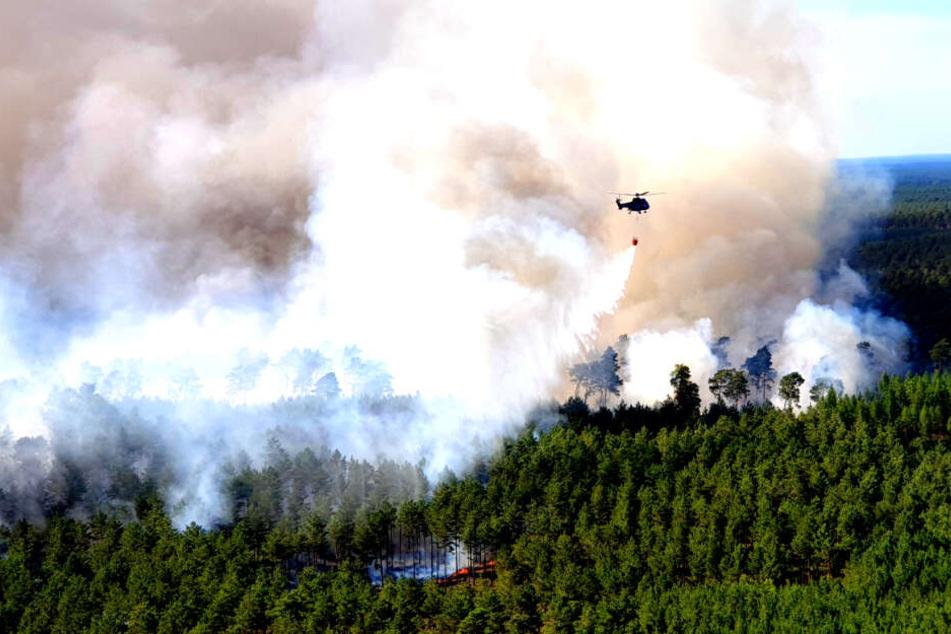 Wälder in Lieberoser Heide standen in Flammen: War es Brandstiftung?