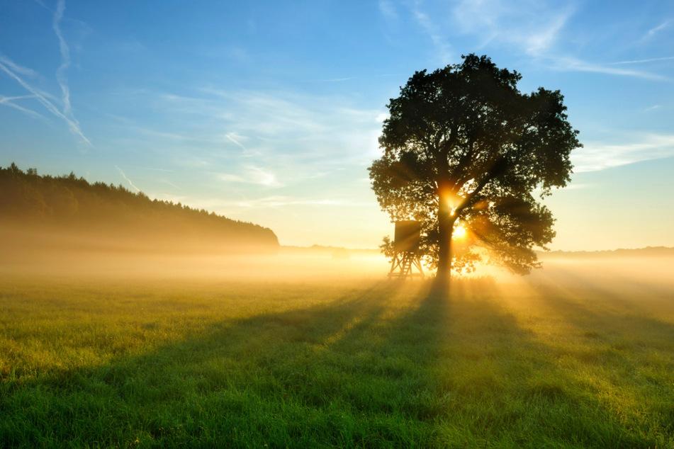 Heute ist Tag des Baumes! Doch es gibt wenig Grund zum Feiern