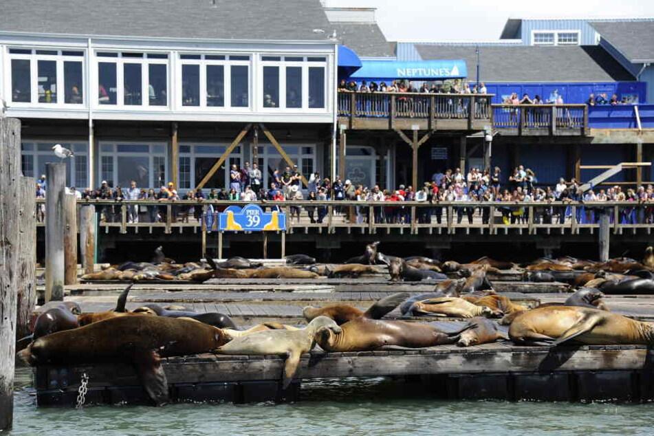 Das Pier 39 in San Francisco ist ein beliebter Touristen-Hotspot.