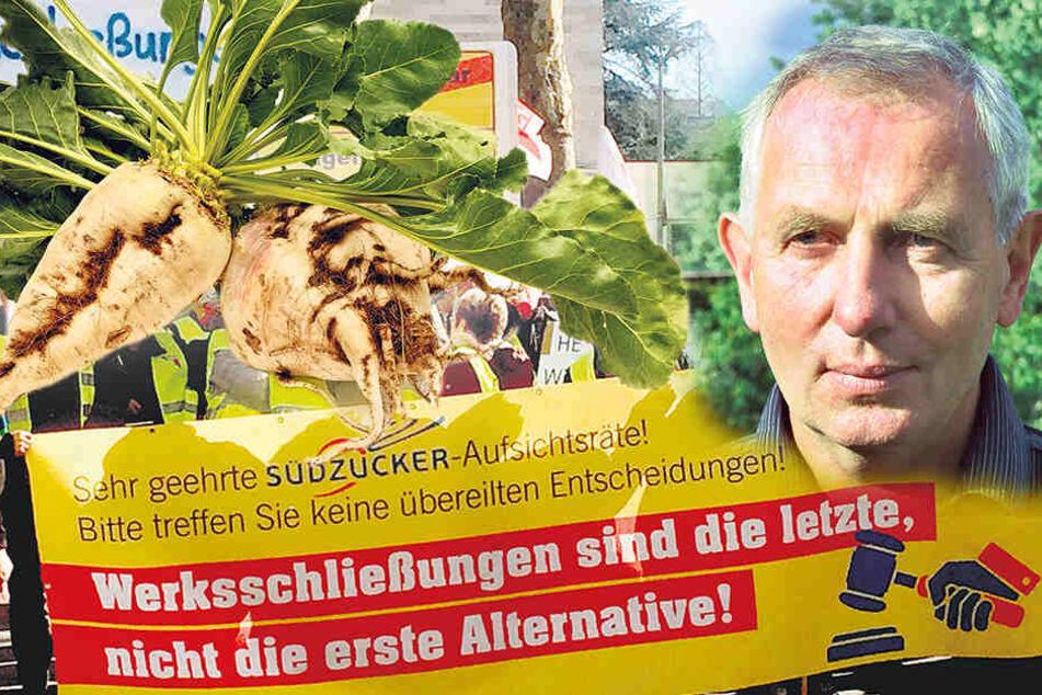 Fabrik-Aus hat Auswirkungen für hunderte Betriebe: Zuckerkrise macht Sachsens Bauern sauer