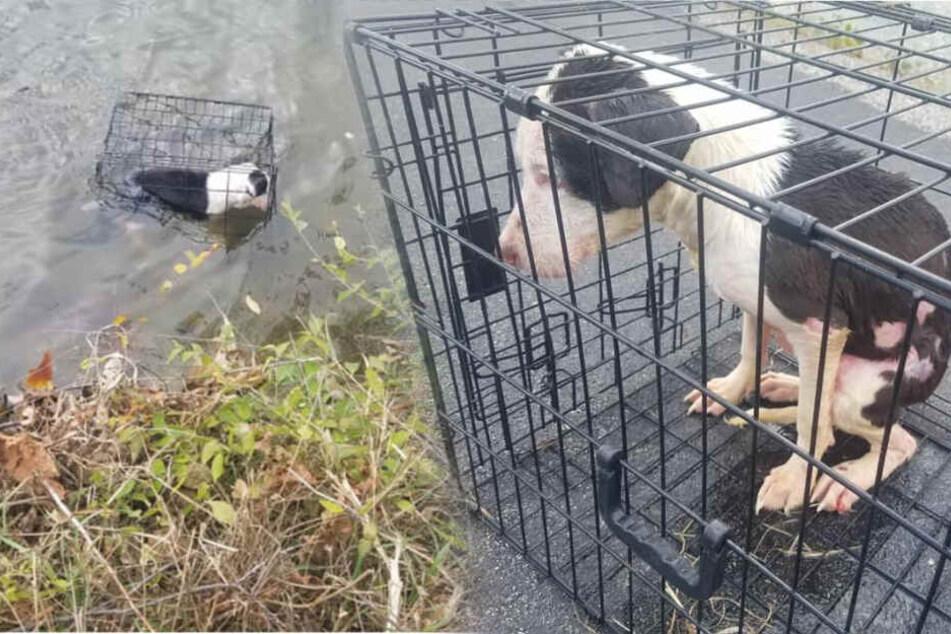 Hund wird in Käfig gesteckt und zum Sterben in den See geworfen