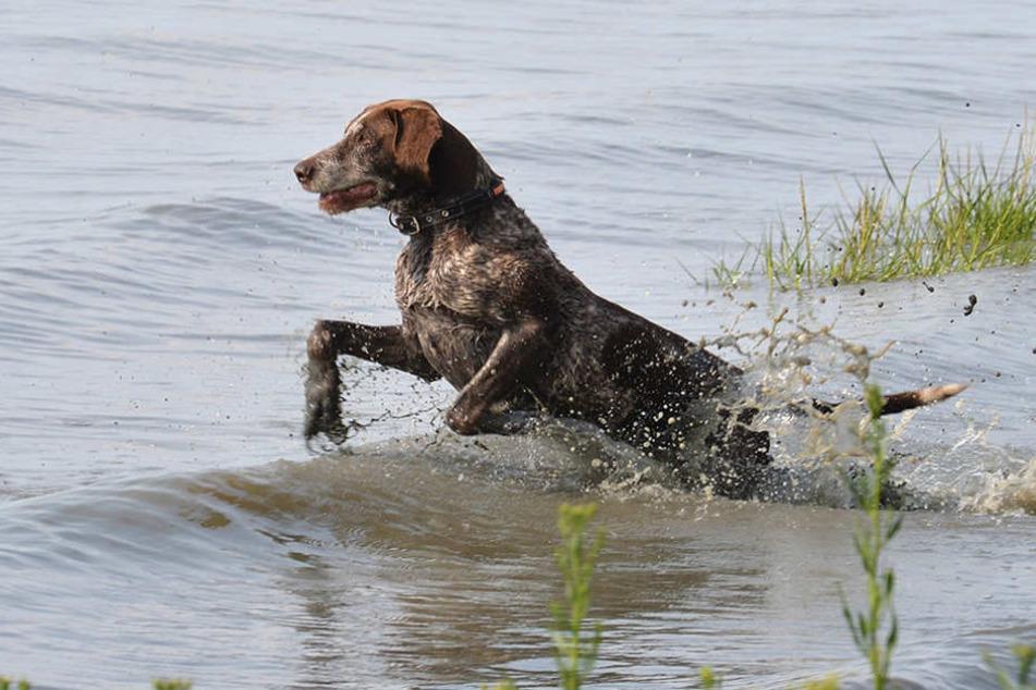 Hunde dürfen nun auch außerhalb der Saison an zwei Berliner Badestellen. (Symbolbild)