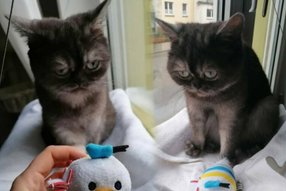 Grumpy kitty with a heart of gold finds her forever home