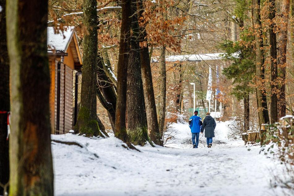 Die Zukunft des Albertparks: Naturschutz statt Forstbetrieb?