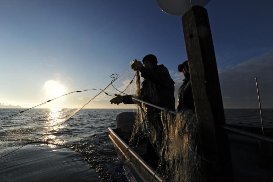 Die Fischer auf dem Bodensee demonstrieren gegen die Zucht der Felchen in Aquakultur-Anlagen. (Symbolbild)
