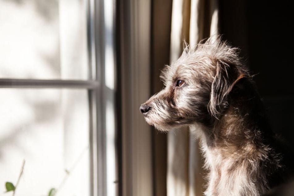 Mysteriöse Krankheit: In diesem Land sterben zahlreiche Hunde